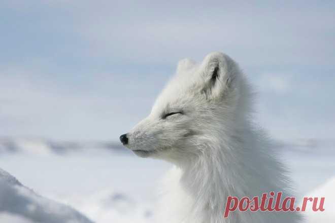 Очень забавные фото животных с эмоциями — найдите на них себя   WWF России   Яндекс Дзен