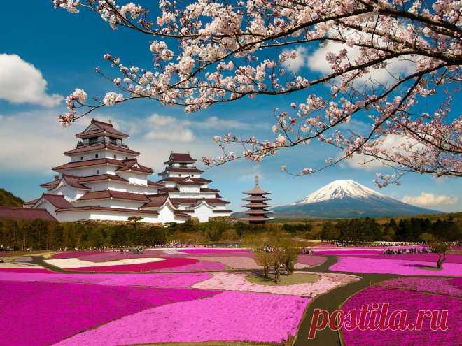 Сегодня, Вы будете изготавливать дерево, которое называется Сакура. Сакура — не просто дерево. Это дерево — символ Японии, символ юности и красоты. Для японцев — это национальный праздник. И когда Сакура начинает цвести — это самое красивое зрелище в Японии. Мне очень нравится Сакура, это дерево очень нежное и, конечно же, мне захотелось сделать себе такую красоту. Хорошо, что у нас множество информации на просторах интернета, и вот теперь я делюсь своим опытом с Вами.