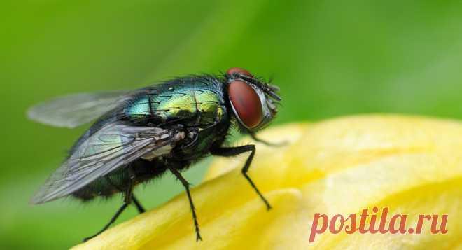 Как избавиться от мух на даче — Ботаничка.ru