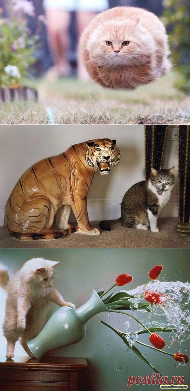 Мега-фотографии котиков, сделанные в нужный момент : НОВОСТИ В ФОТОГРАФИЯХ