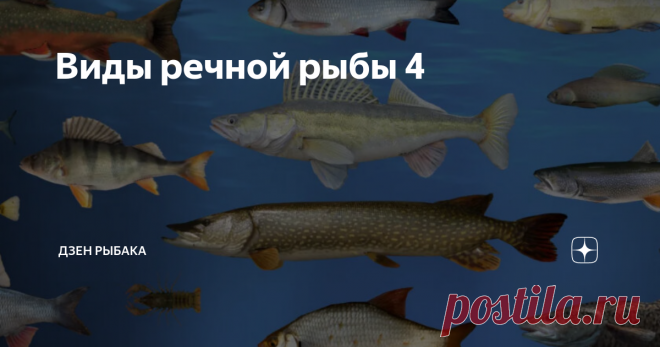 Виды речной рыбы 4 Представляем обзор самых распространённых представителей рыбы, обитающей в пресной воде. Всё самое важное по видам в отдельности.  (белый амур, чебак, елец, красноперка, ротан, омуль, чир)