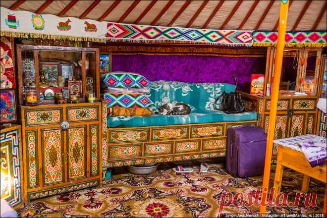 Почему монголы ненавидят кошек - Жизнь в путешествиях