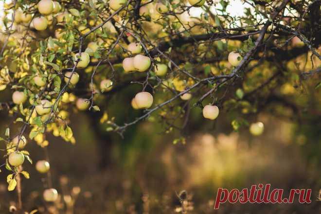 Прививка деревьев под кору (или за кору) — экстренная и действенная помощь деревьям Такие прививки улучшают урожайность, делают крону более пышной и помогают прижиться сложным и капризным культурам. Выбор дерева для прививки. Иллюстрация для статьи используется по стандартной лицензии ©life-hacky.ru Выбор дерева для прививки. Иллюстрация для статьи используется по стандартной лицензии... Читай дальше на сайте. Жми подробнее ➡