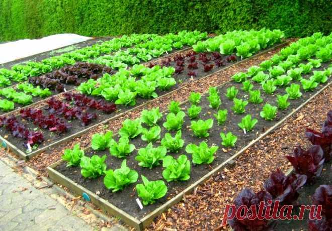 На каком расстоянии друг от друга высаживать овощи - схемы посадки
