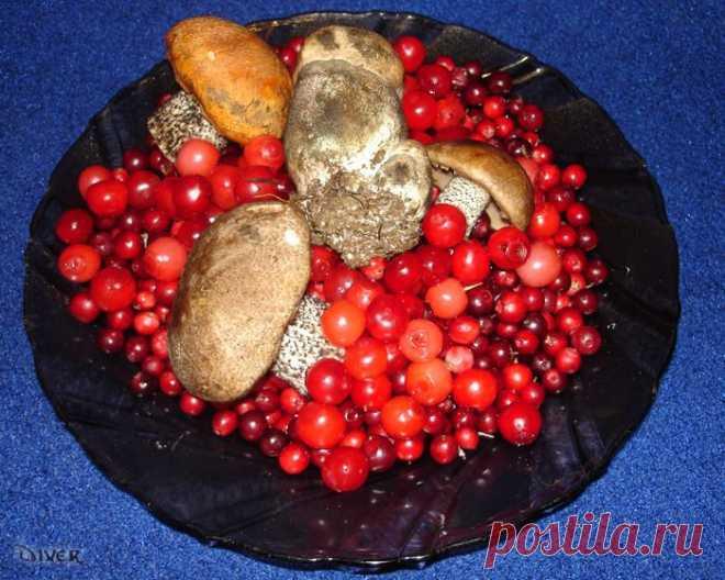 Какие грибы и ягоды меньше всего накапливают радиацию