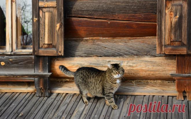 Деревня. Лето. Коты. Душевно. 32 шикарных фото, чтобы отвлечься от суеты   Ламповая кошка   Яндекс Дзен