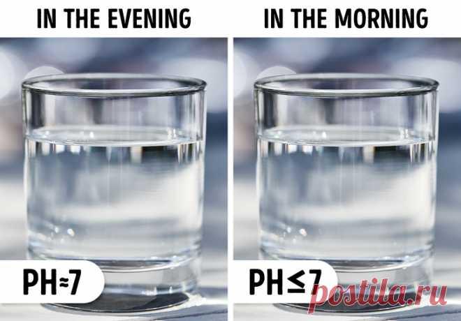 Почему утром нужно пить свежую воду | VestiNewsRF.Ru