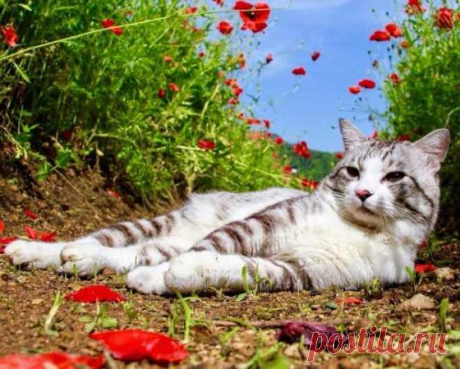Лето, дача, красота! Не жизнь, а сказка у кота!