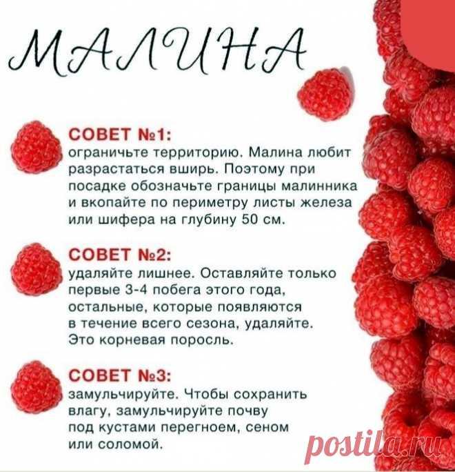 proxy.imgsmail.ru (662×686)