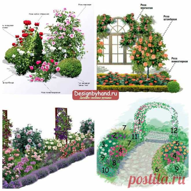 Bed with roses: registration, scheme and combination. What can be put together with them? Photo