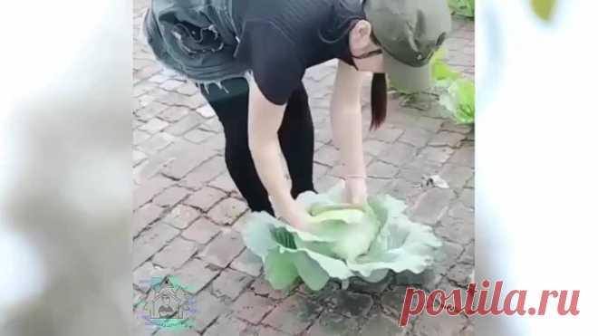Огороды бывают разные: что делать, если мало земли, а кушать хочется свое:)