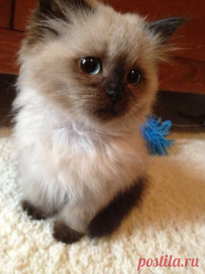 Words cannot describe how cute this little guy is - Imgur