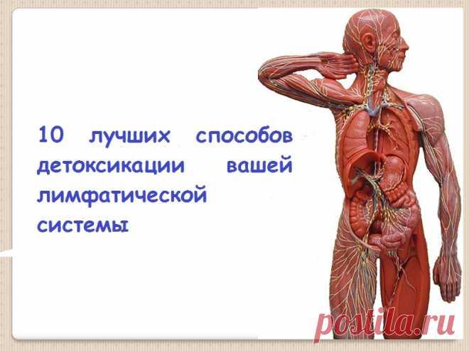 Очистите от токсинов ваш организм: 10 лучших способов детоксикации вашей лимфатической системы