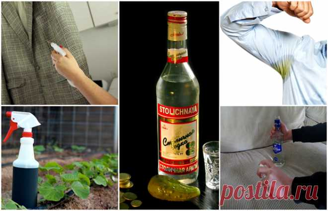Vodka and thirteen ways of its unusual application \u000d\u000a1. Add to a vase with the flowers (peonies, for example) several drops of vodka and a teaspoon of sugar, and you prolong them life.\u000d\u000a\u000d\u000a2. Without serious consequences to remove the adhesive plaster which stuck tightly, moisten it waters …