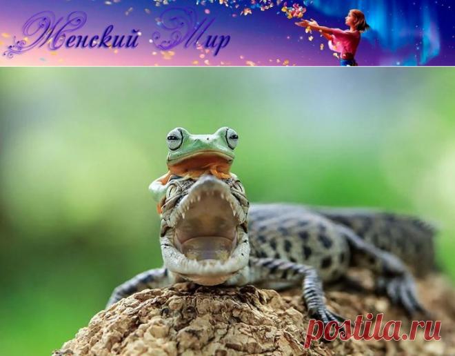 Царевна-лягушка: фантастические снимки индонезийского фотографа » Женский Мир