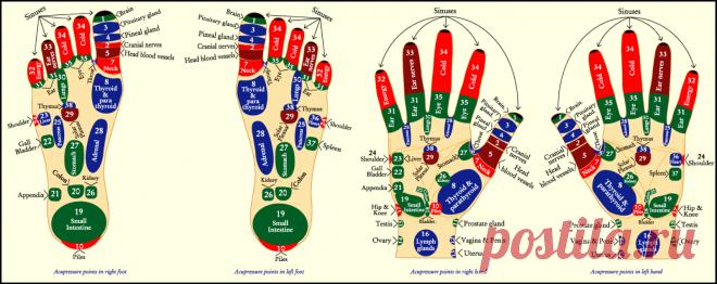 Ein Leitfaden für Akupunktur und Massagen   Naipocare Blog