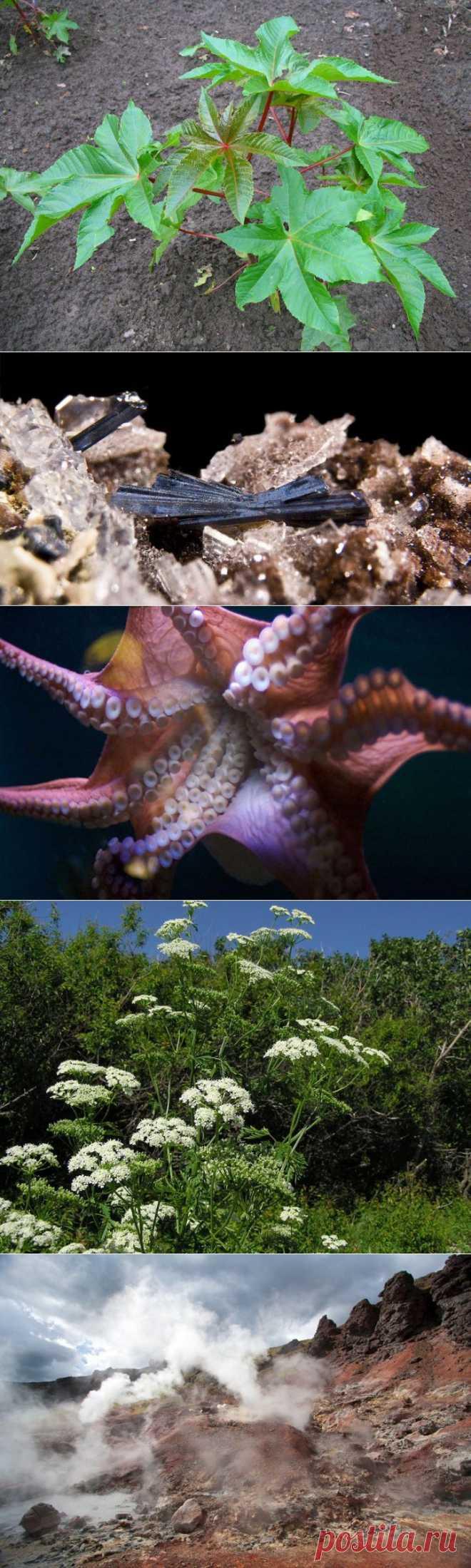 (+1) тема - 7 неожиданных способов, которыми природа может вас убить | Среда обитания