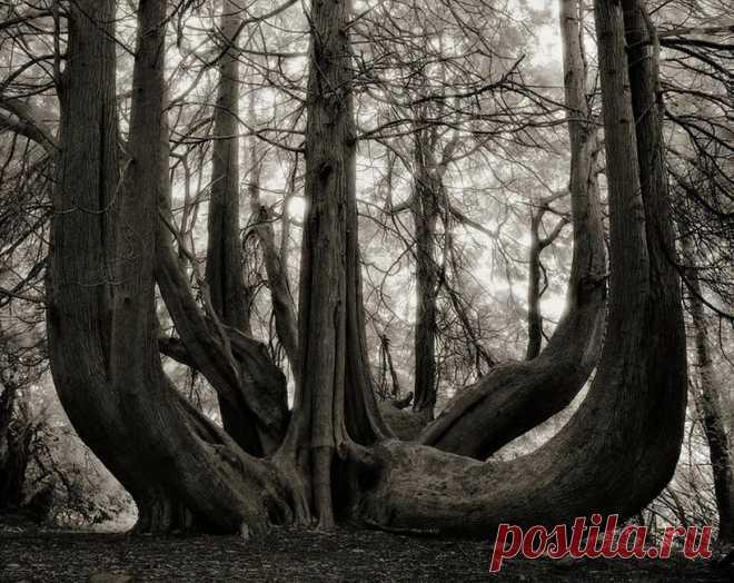 20 самых старых и удивительных деревьев Земли