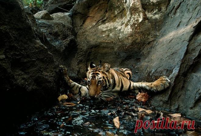 Тайная жизнь животных в фотографиях