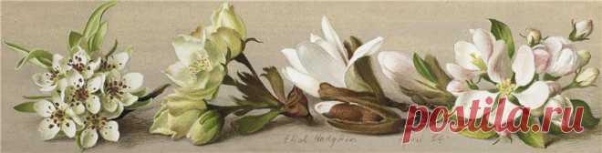 ЦветочноФруктовое... Eliot Hodgkin (British, 1905-1987)