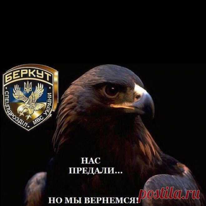 Беркут дает советы белорусским коллегам. Без политики! | WPRISTAV.RU | Яндекс Дзен