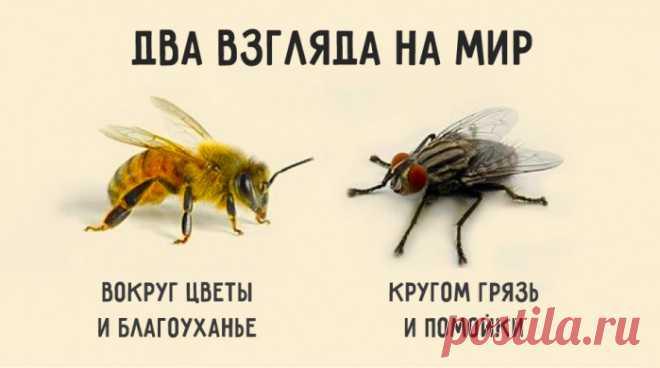 Краткая и мудрая притча о двух типах мышления, определяющих нашу судьбу: Если спросить муху, есть ли в окрестностях цветы, она ответит: – Не видела никаких цветов. Зато навоза в той вот канаве полным-полно. И муха начнёт перечислять все помойки, на которых побывала. Но спросите пчелу, видела ли она в окрестностях какие-нибудь нечистоты, и она ответит: – Нечистоты? Нет, не видела нигде. Здесь так много благоуханных цветов! Один на самом цветущем лугу найдёт нечистое место и сядет на него, а…
