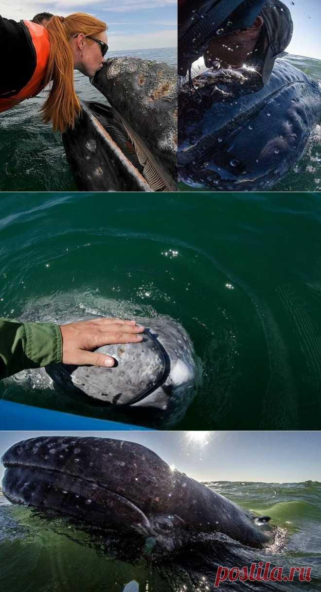 Дружеский поцелуй с китом