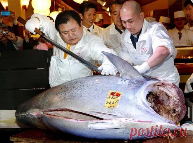 Топ-9 самых дорогих рыб на планете Не многие знают, что стоимость отдельных особей, пойманных в морских и пресных водоемах, может превышать отметку в миллион долларовФугуФугу, называемая также рыбой-шаром, кулинарами признается одной из ...