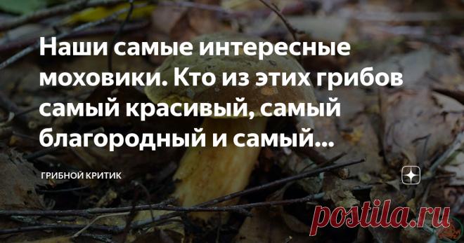 Наши самые интересные моховики. Кто из этих грибов самый красивый, самый благородный и самый странный? Разбираемся вместе Накануне наступающего грибного сезона вспомнил сам и решил напомнить другим грибникам об интересной группе грибов, которые растут в российских лесах. Вы только не думайте, пожалуйста, что эти грибы настолько патриотичны, что даже по шенгенской визе не покидают наши края и растут исключительно на просторах нашей Родины. Растут и за границей. Но нам это з...