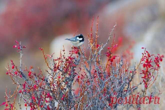 15 ослепительных фотографий птиц России   WWF России   Яндекс Дзен