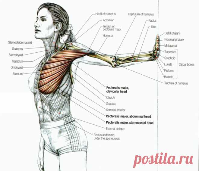 Camilla Voler's exercises for strengthening of a breast