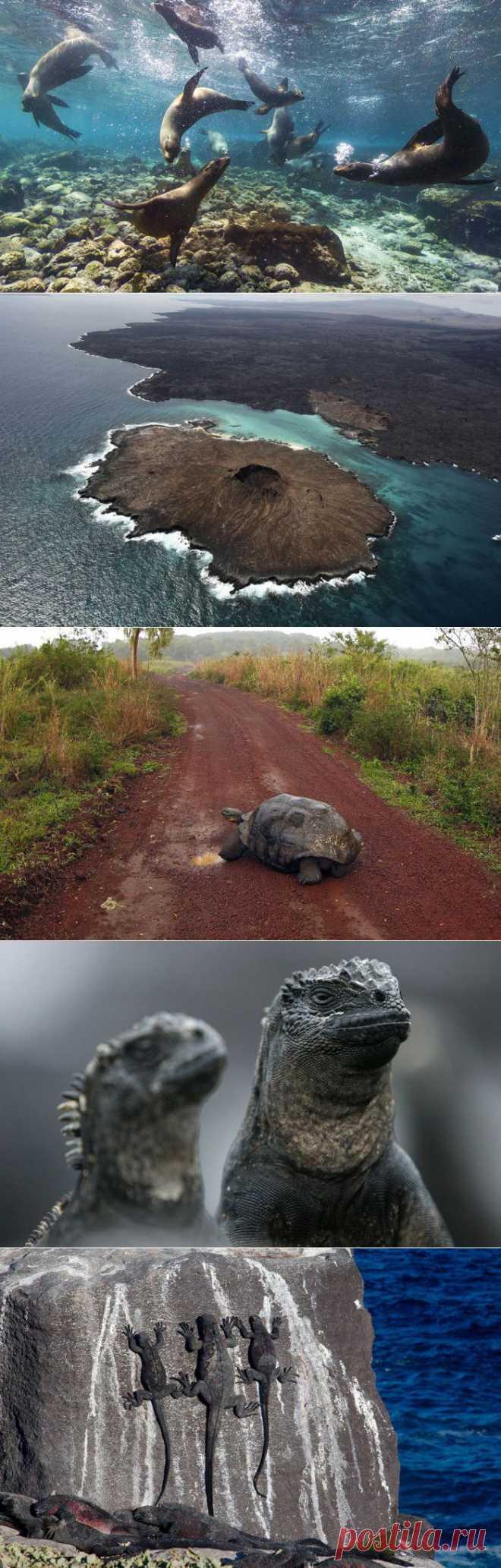 Путешествие на Галапагосские острова | МУЗА НАШЕГО ДВОРА