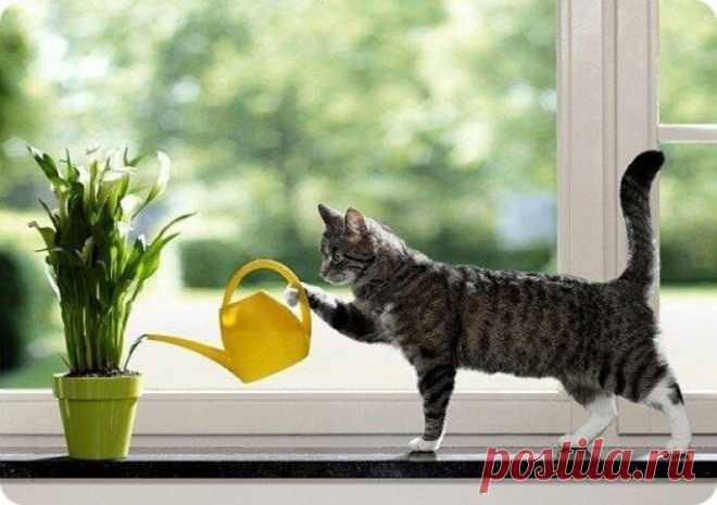 Используйте этот секрет для полива комнатных растений — и у вас будет красивый цветущий сад круглый год! | Фильтры БАРЬЕР | Яндекс Дзен
