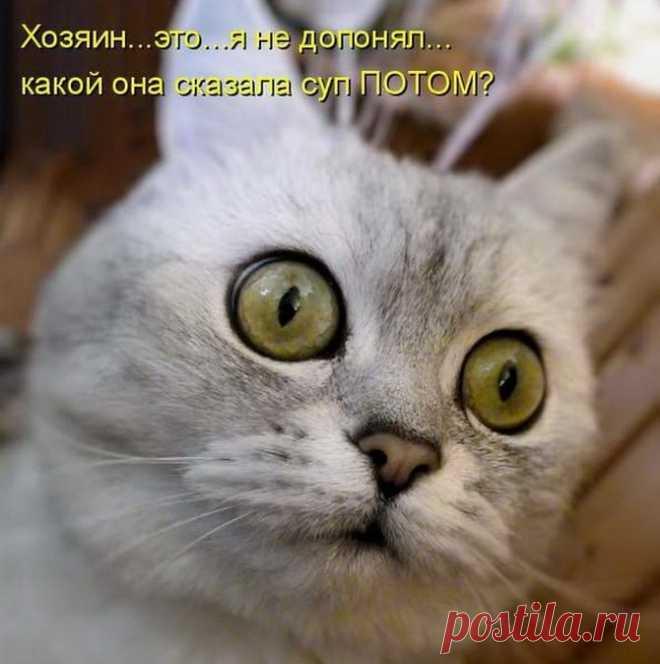 Картинки с надписями коки, котят смешные