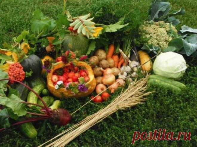 Лунный посевной календарь садовода и огородника на 2020 год