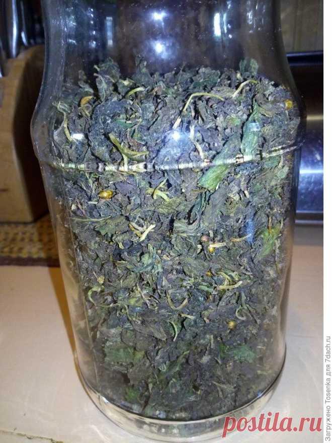 Ферментированный чай из листьев черной смородины - Образованная Сова