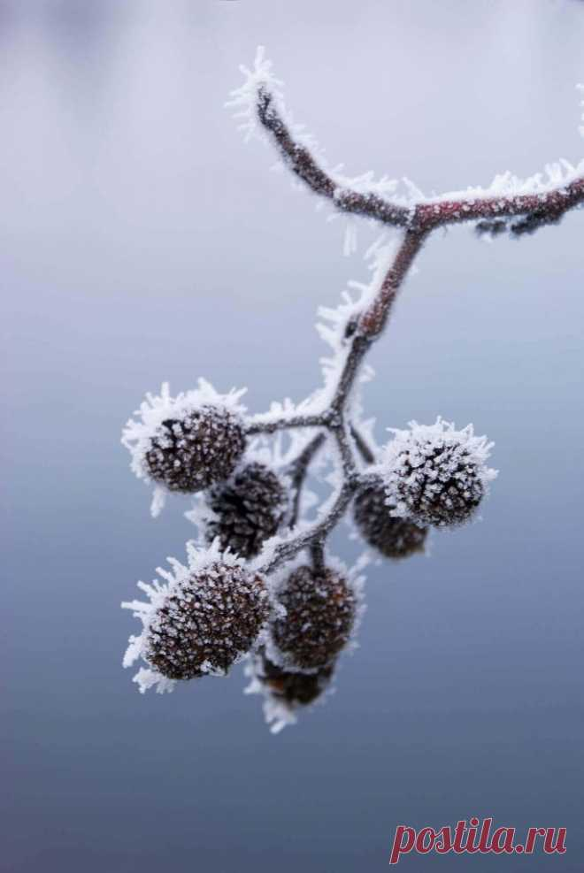 Календарь сезонных работ в саду: январь ~ Planetalsad