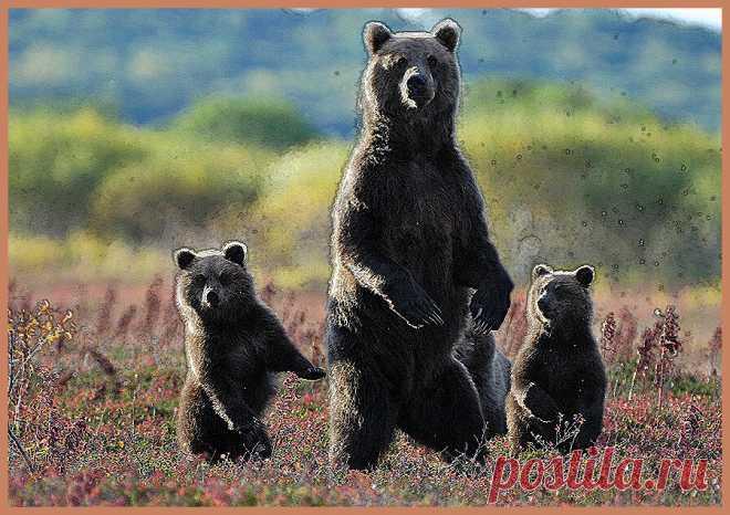Как уберечь себя и близких при встрече с медведем | УДАЧНАЯ РЫБАЛКА И ОХОТА | Яндекс Дзен