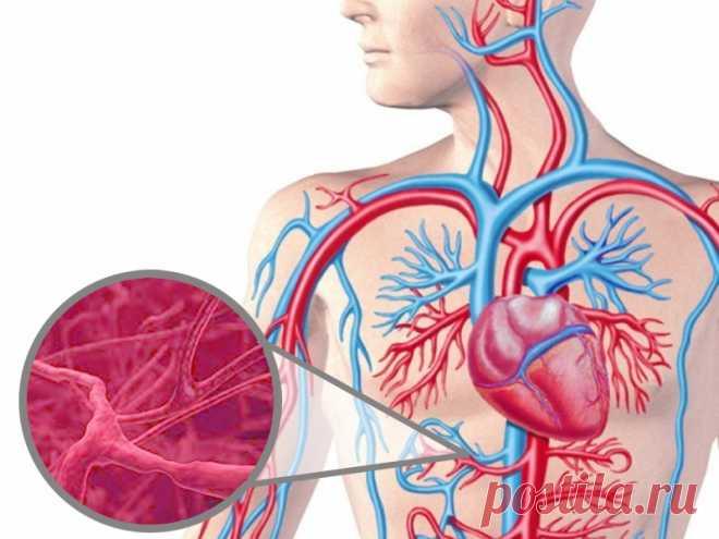 Что нужно знать о воспалении сосудов Васкулит– серьезное заболевание сосудов, причины которого до сих пор остаются загадкой для современной медицины. При обострении воспаляются стенки вен и капилляров, нарушается кровоснабжение внутренних органов. Проблема имеет обширную классификацию, делится на первичную и вторичную форму.