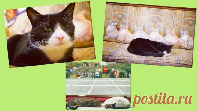 Башни, замки и целые города: музеи кошек в России и в мире - Питомцы Mail.ru