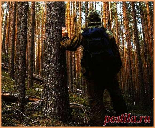 Как без костра пережить осенью ночь в лесу   УДАЧНАЯ РЫБАЛКА И ОХОТА   Яндекс Дзен