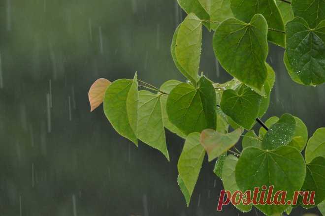Сбор дождевой воды: виды емкостей для сбора дождевой воды с крыши на даче и в загородном доме, система слива