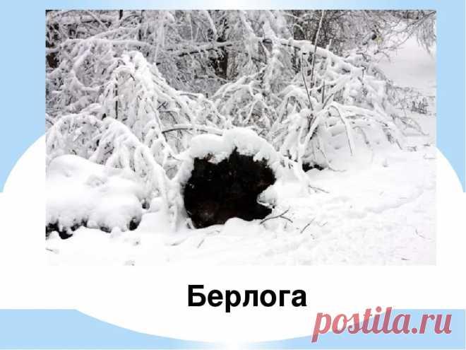 медведь зимой фото в берлоге — Яндекс: нашлось 7млнрезультатов