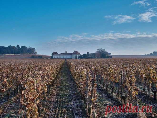 Simple Wine News — журнал про вино, виноделие и гастрономию