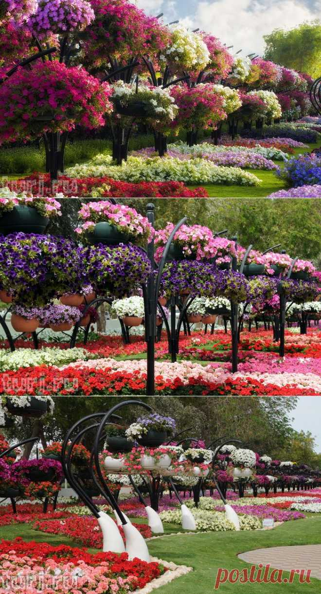ОАЭ, Эль-Айн: Парк цветов Al Ain Paradise - рай в маленьком городке / Мировые Достопримечательности / Мировые достопримечательности. Фото достопримечательностей, идеи для путешествий. Туристический журнал.