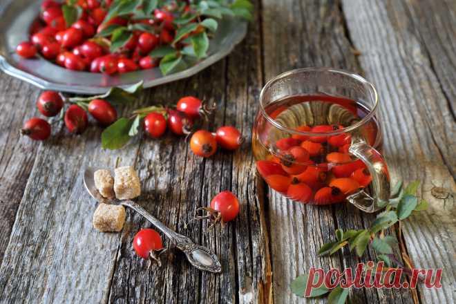 Полезные напитки из плодов шиповника