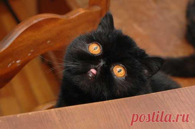 Лучшая кошка этого сезона – Черника : НОВОСТИ В ФОТОГРАФИЯХ