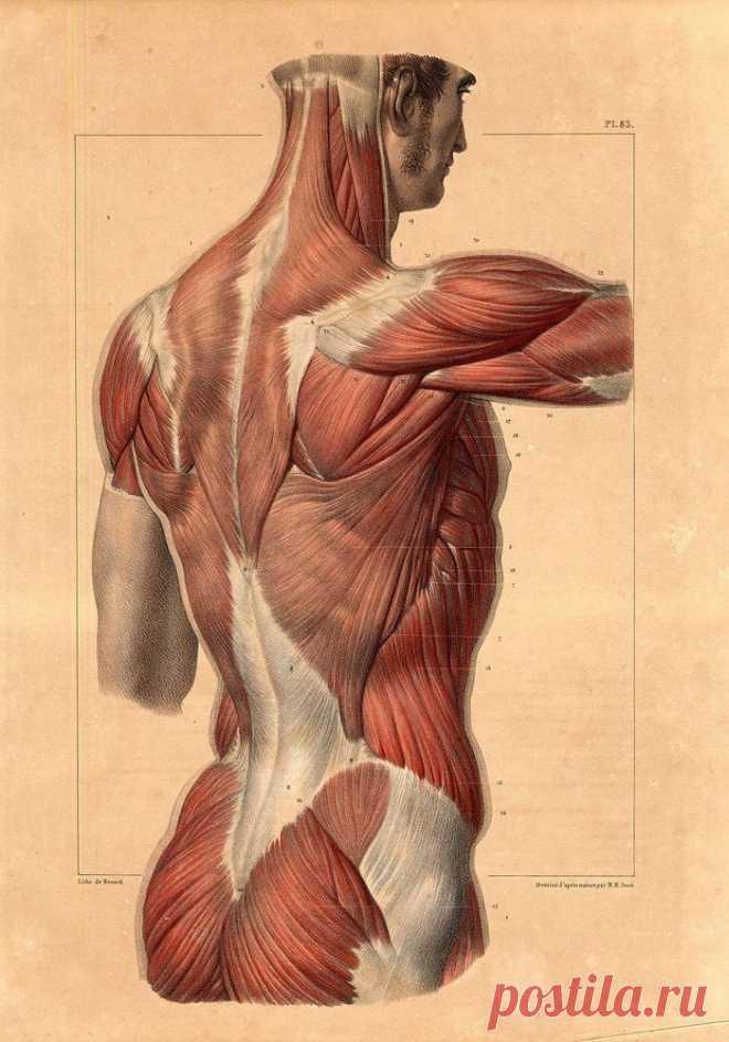 Гимнастика Гермеса: нормализует вес, укрепляет нервную систему, ускоряет метаболизм Крайне эффективная гимнастика из глубины веков. Предназначена для зарядки организма эфирной энергией. Занимает всего 15 минут с утра и заряжает бодростью на весь день.В течение полугода систематически...