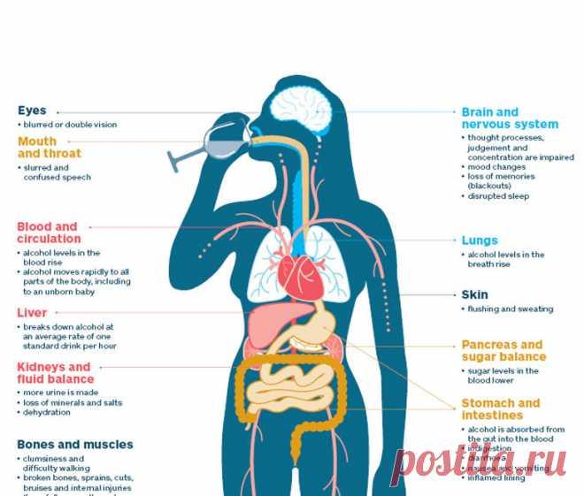 Как алкоголь влияет на организм человека При употреблении спиртных напитков негативное воздействие алкоголя сказывается не только на самочувствии, но и на общем состоянии организма.