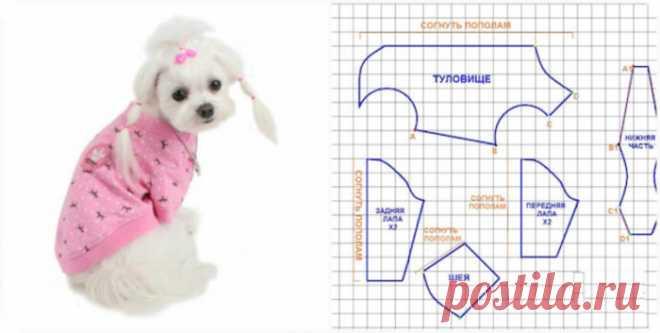 Одежда для собак своими руками выкройки. Сшить одежду для собак своими руками, из старых вещей, из свитера, теплую одежду. Как пошить одежду для собаки своими руками